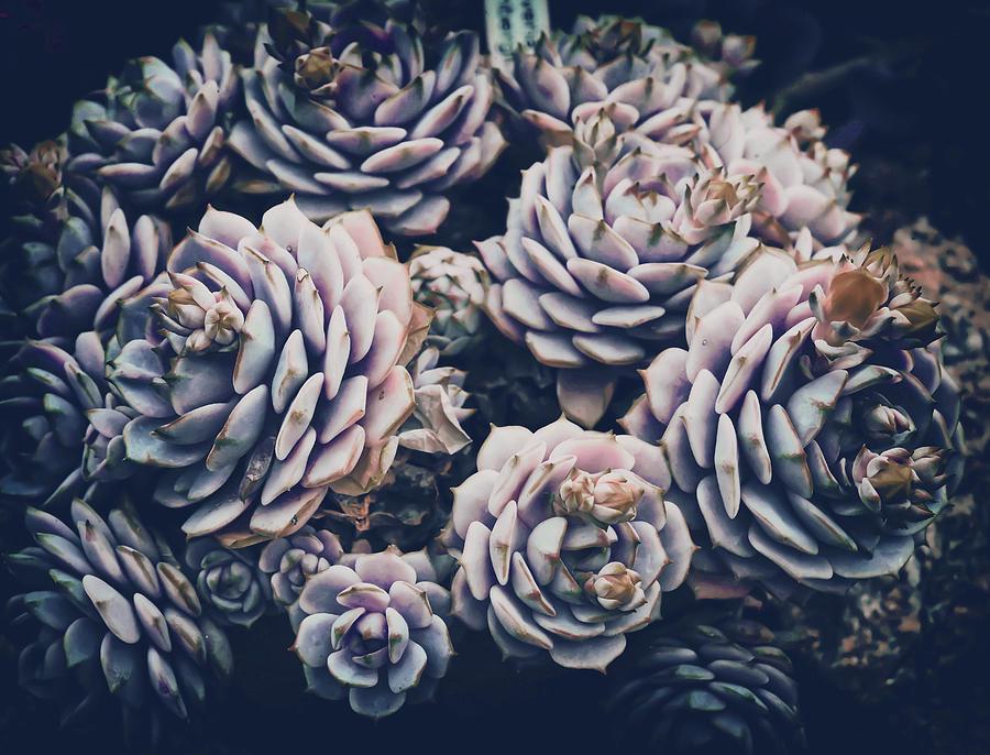 Cactus Plant Nature Flora Green Prickly Spur - Surreal Art By Ahmet Asar Digital Art