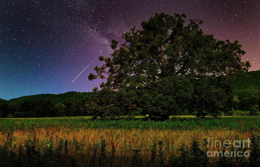 Cades Cove Oak Tree Photograph