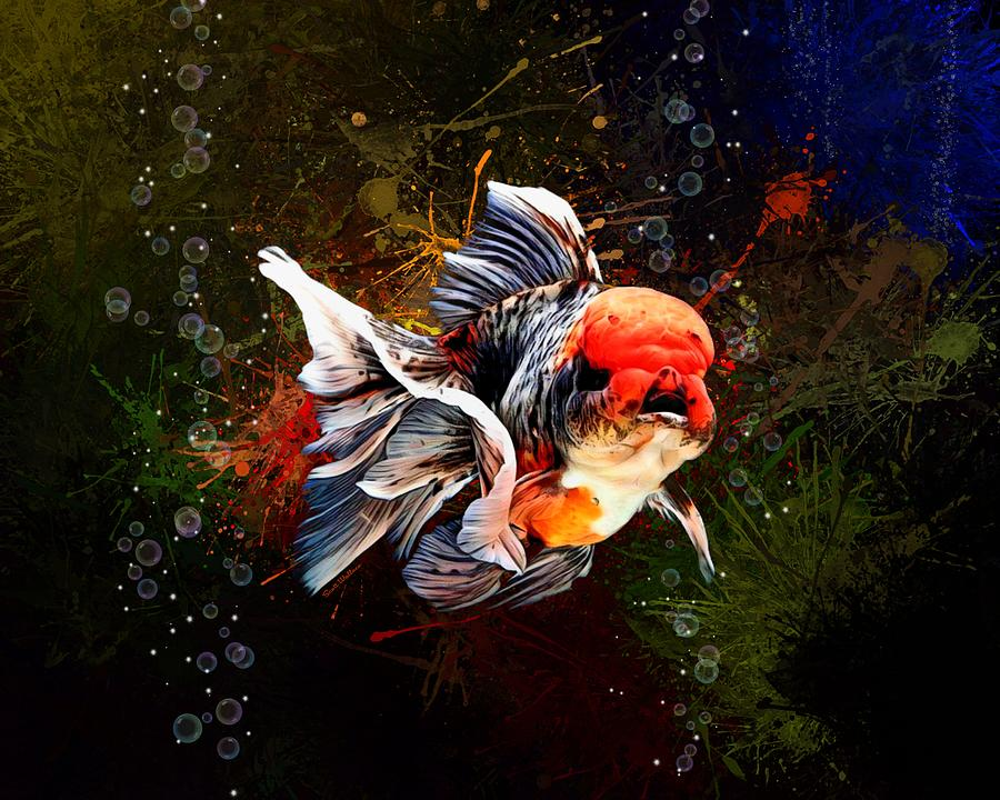 Calico Oranda Goldfish Digital Art