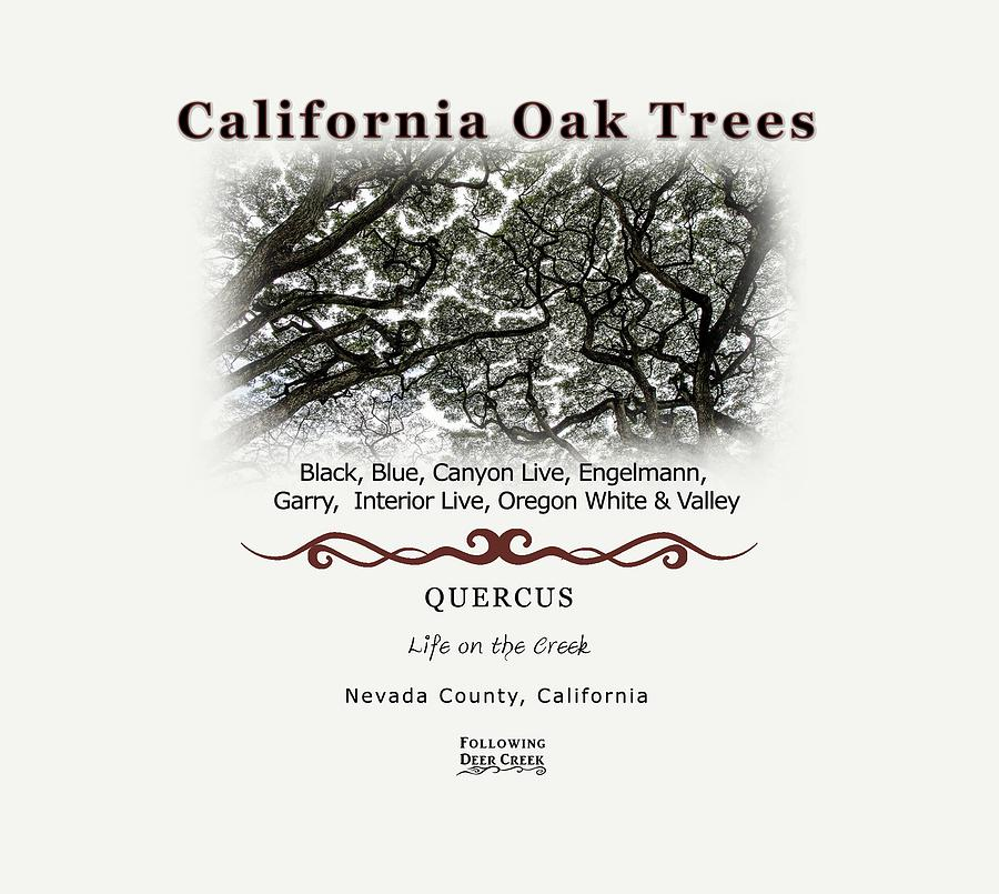 California Oak Tree Species by Lisa Redfern