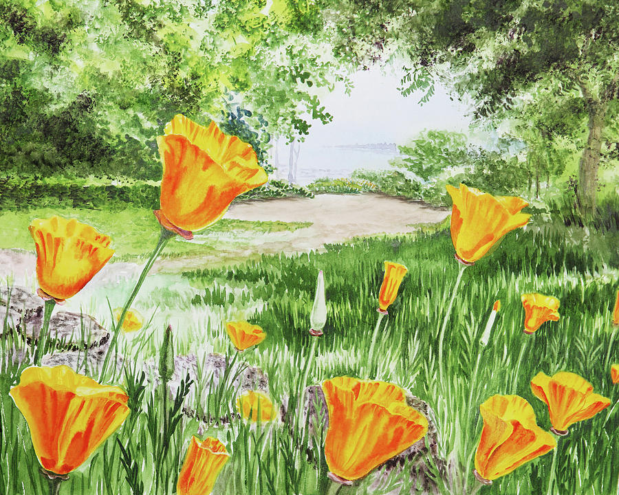 California Poppies Flower Garden Watercolor Painting by ...