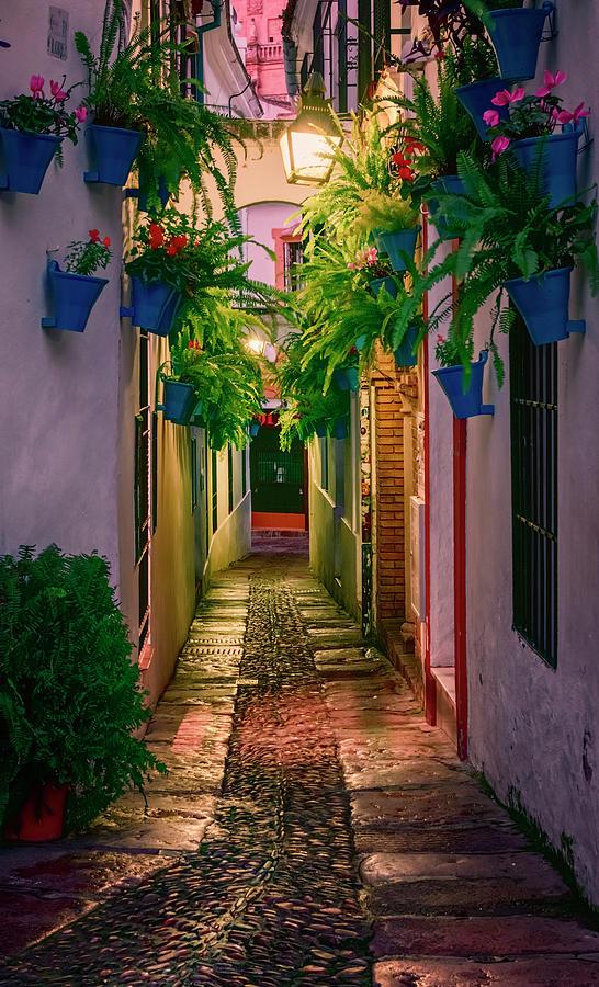 Cordoba Photograph - Calleja de las Flores Cordoba Spain Night by Joan Carroll