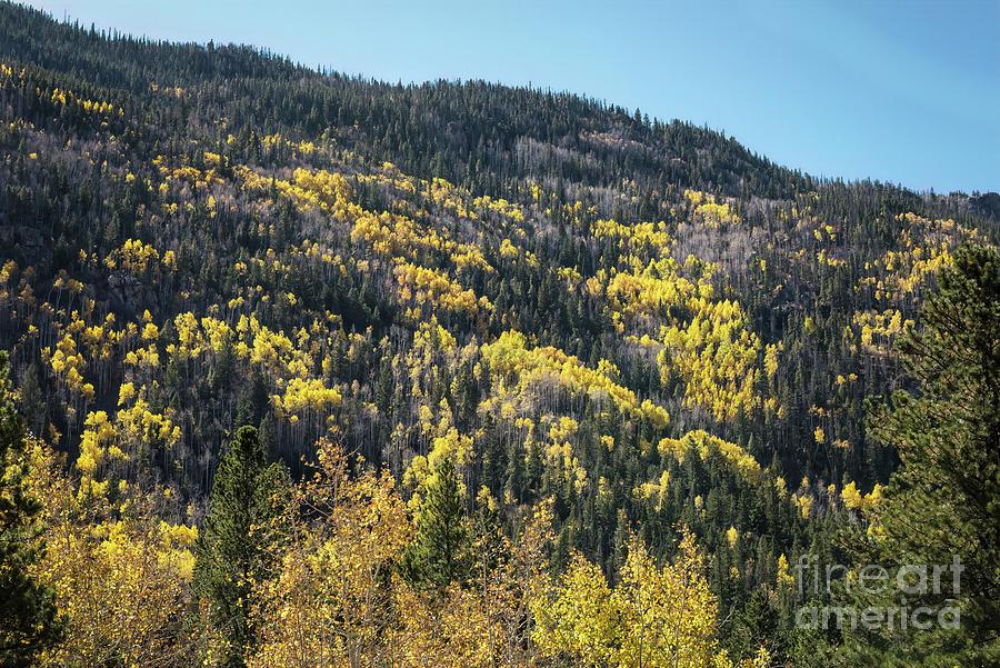 Cameron Pass Autumn by Jon Burch Photography