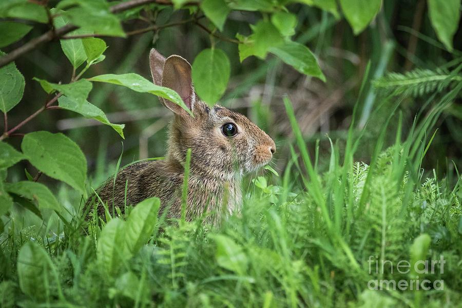Camo Bunny Photograph by Eden Watt