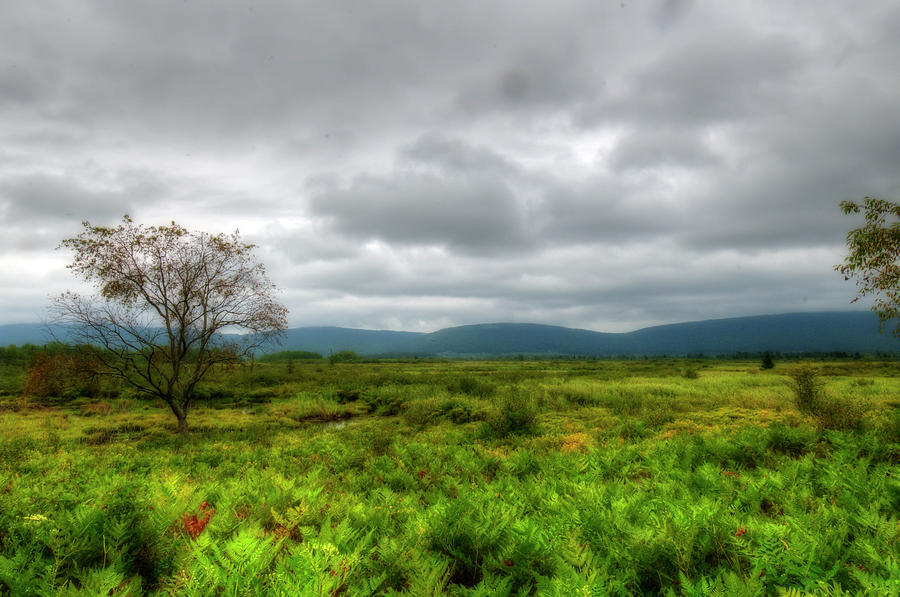 Canaan Valley on overcast day by Dan Friend