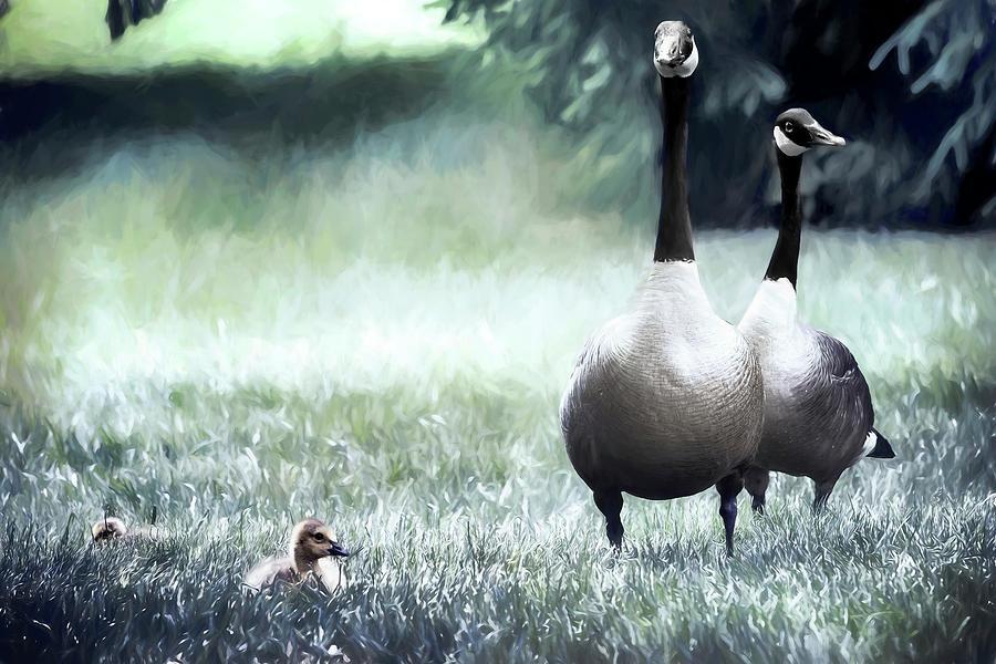 Canadian Geese Series 2 by Darlene Kwiatkowski