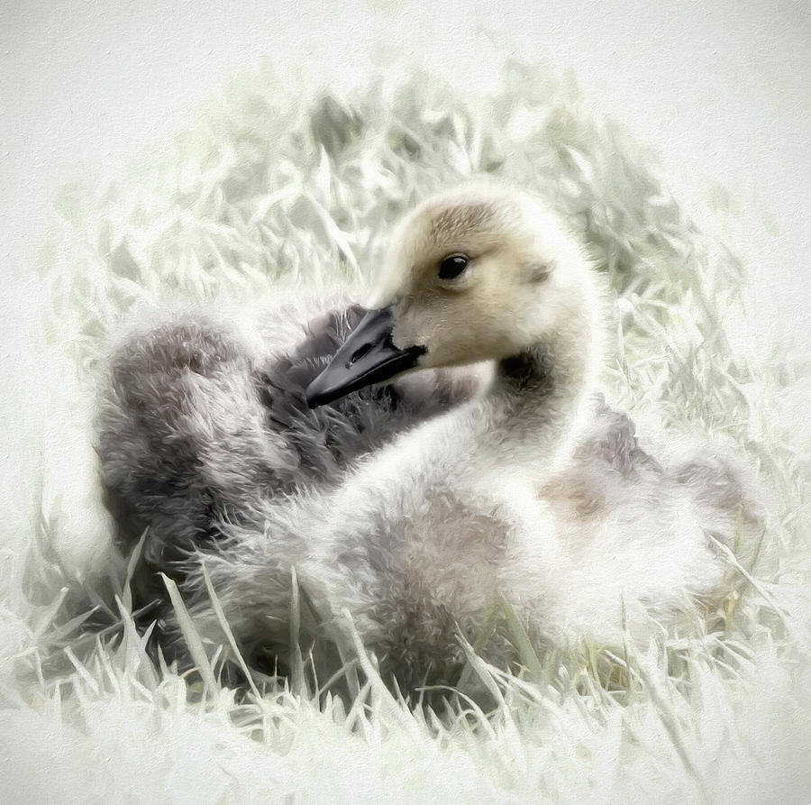 Canadian Geese Series 4 by Darlene Kwiatkowski