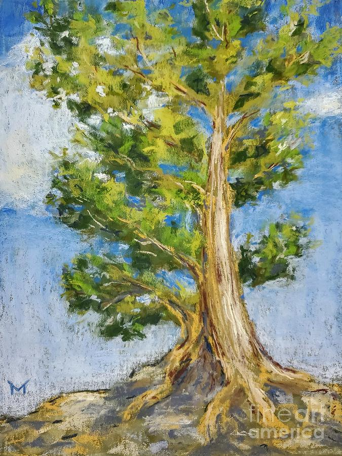 Canyon Tree by Maria Langgle