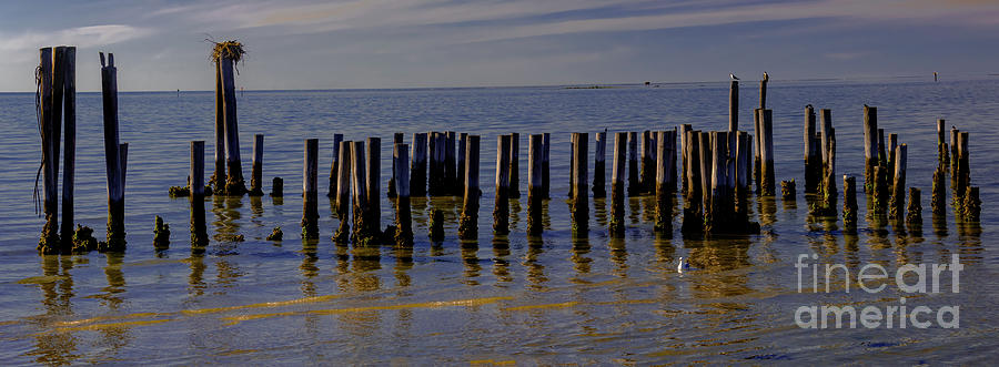 Cape Charles Pilings Photograph