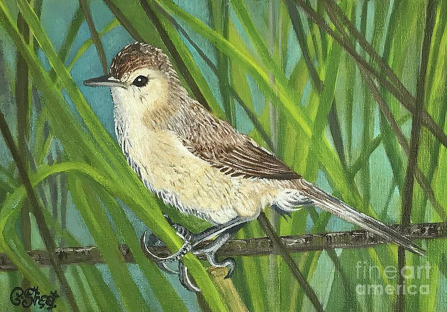 Cape Reed Warbler Painting