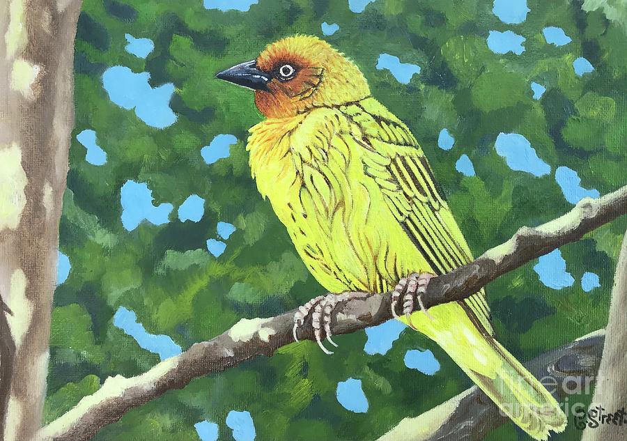Cape Weaver Painting