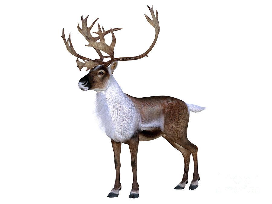Caribou Buck Walking Digital Art