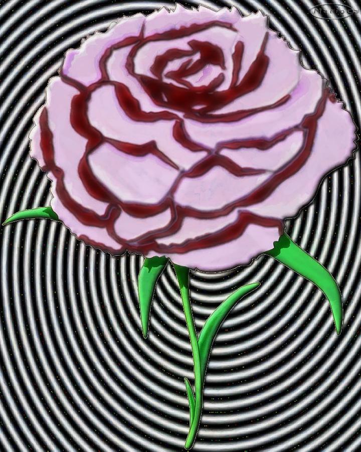 Carnation Pop by Mario Carini