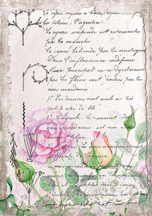 French Digital Art - Carnet Botanique 3 by Pauline Black
