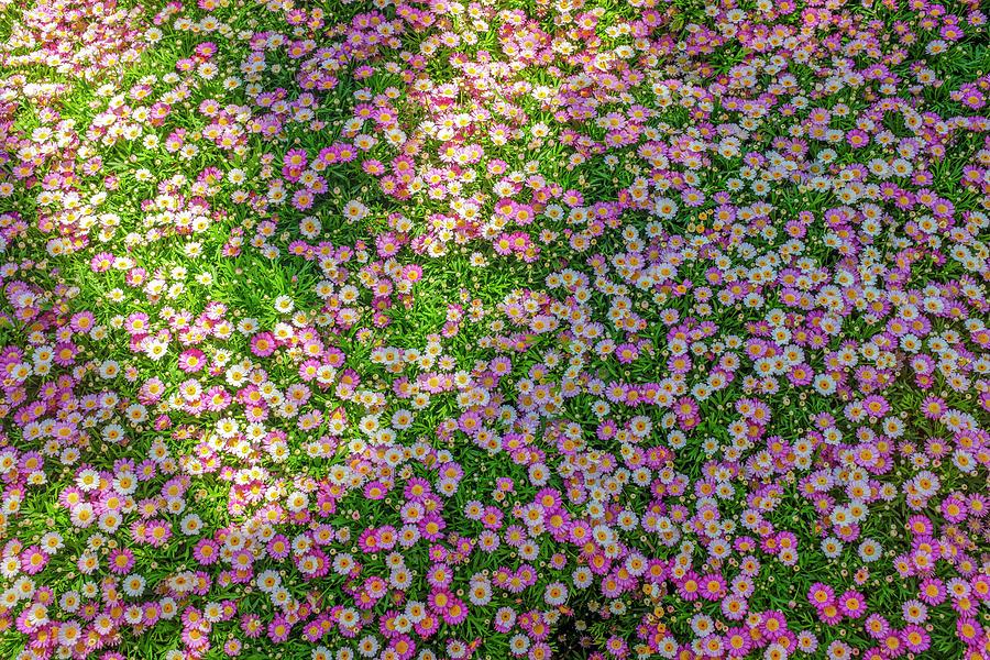 Carpet Of Flowers Photograph