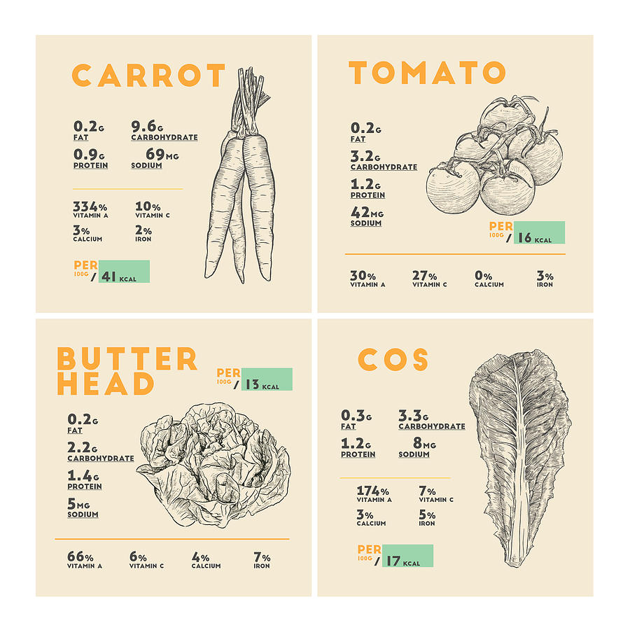 Carrot Tomato Butterhead Lettuce Cos Lettuce Nutrition Facts Drawing By Beautify My Walls