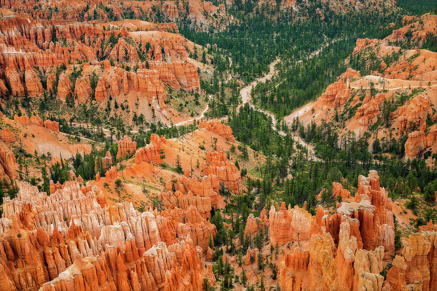 Bryce Canyon National Park Photograph - Carved Into Sections by Ann Skelton