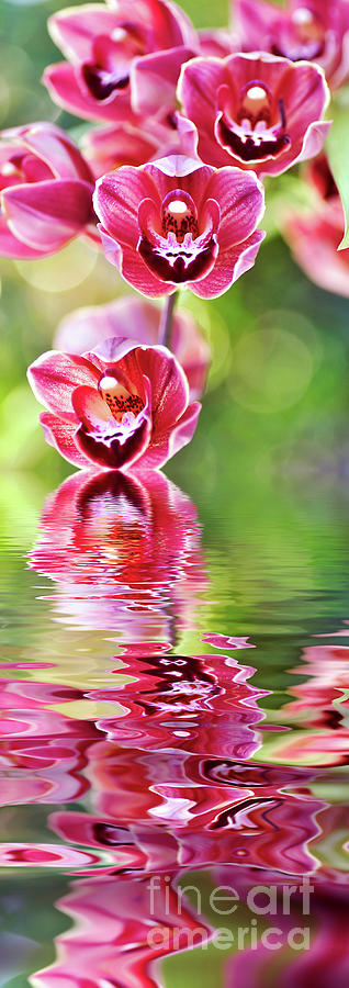 Cascading Orchids Reflecting by Kaye Menner by Kaye Menner
