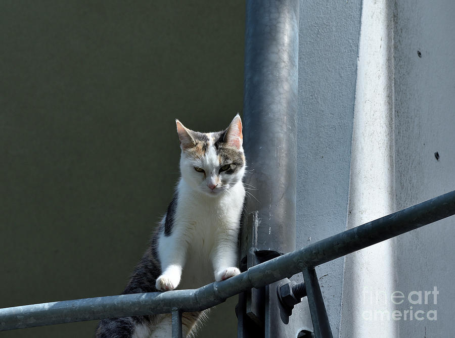 Cat On The Railing Photograph