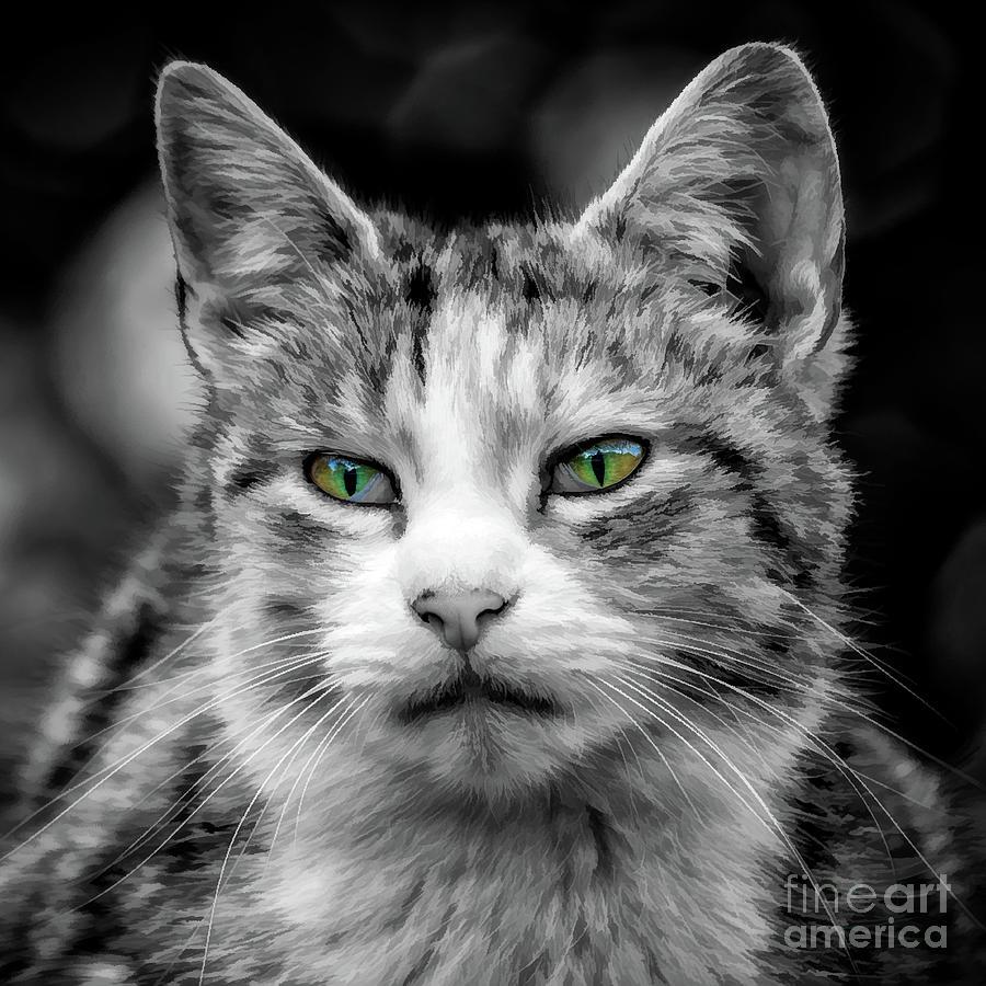 Cat Portrait  by Adrian Evans