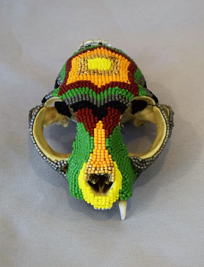 Skull Mixed Media - Cat Skull by Charla Van Vlack