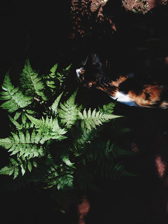 Cat Walking By Plant Photograph by Vinita Barretto / EyeEm