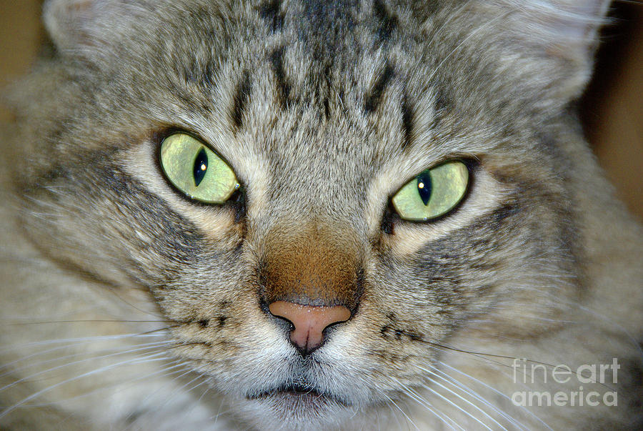 Cats Eyes Photograph