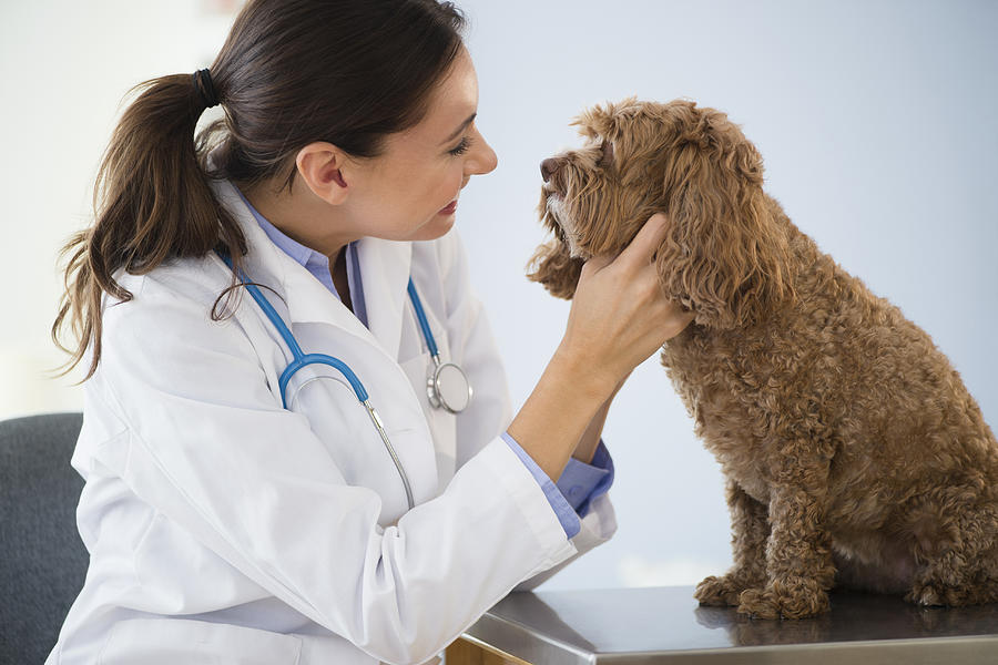 Caucasian veterinarian checking mouth of dog Photograph by JGI/Jamie Grill