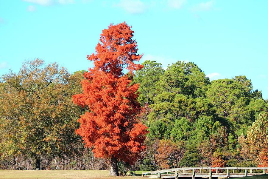 Cedar Tree by Cynthia Guinn