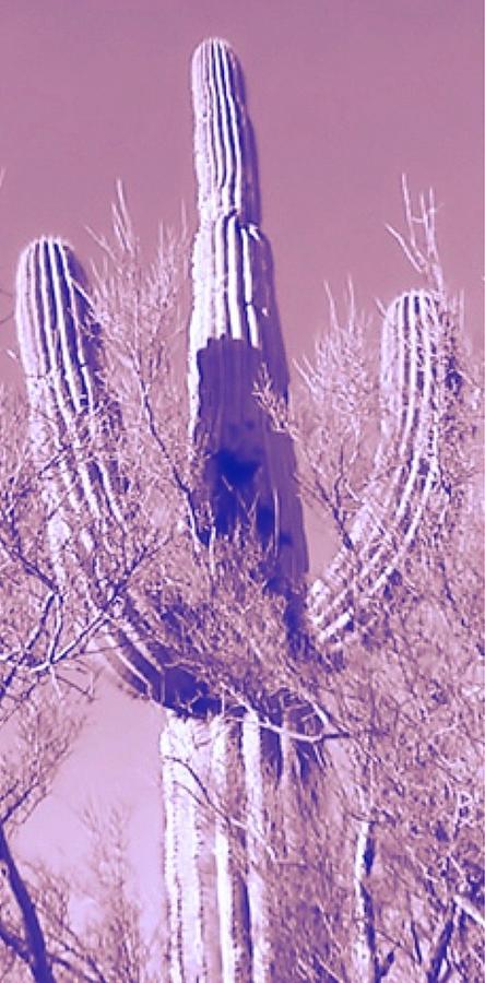 Center Panel Pop Saguaro Triptych by Judy Kennedy