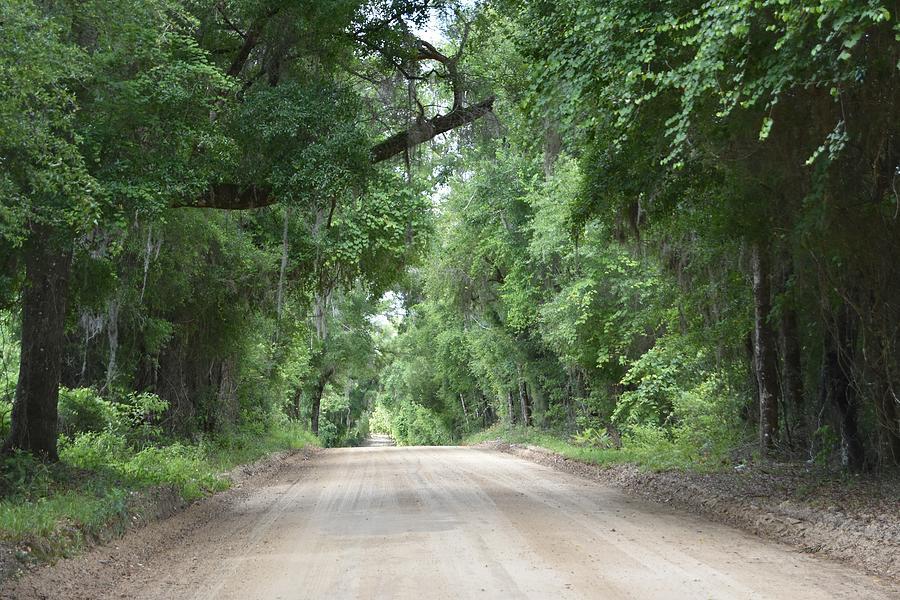 Centerville Avenue Dirt Road Photograph