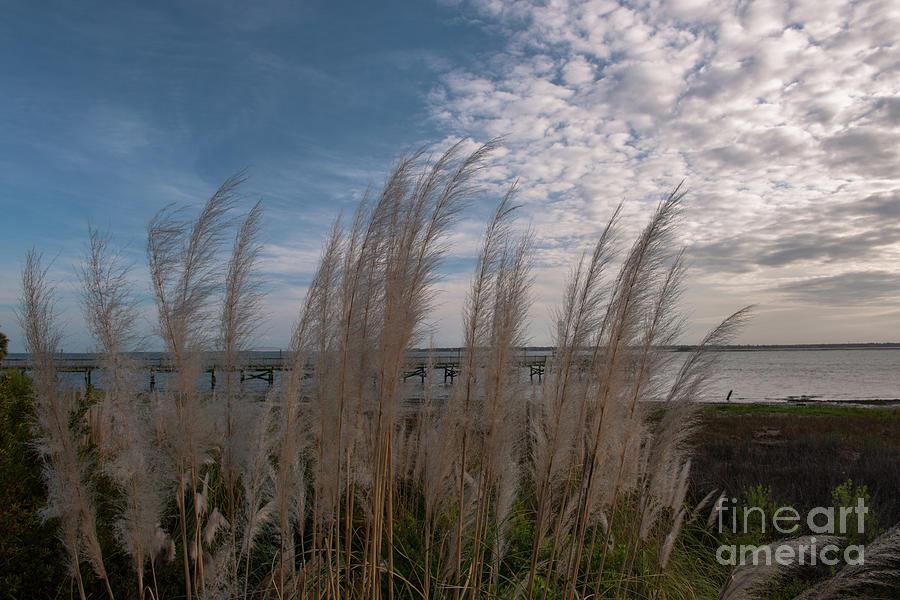 Charleston Sea Breeze - Pampas Grass Photograph