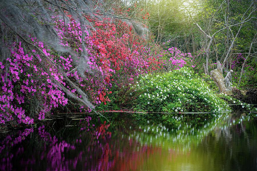 Charleston South Carolina Magnolia Reflections Photograph