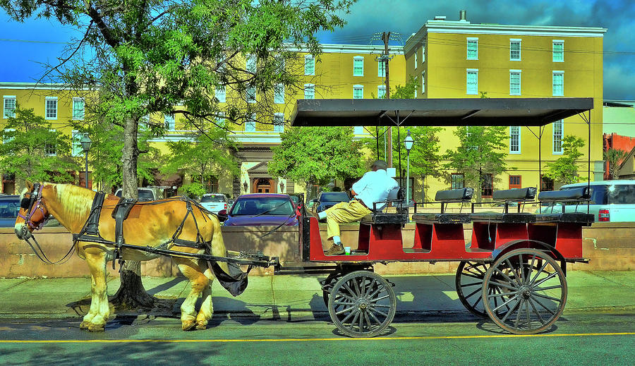 Charleston Tour Carriage Waiting Photograph