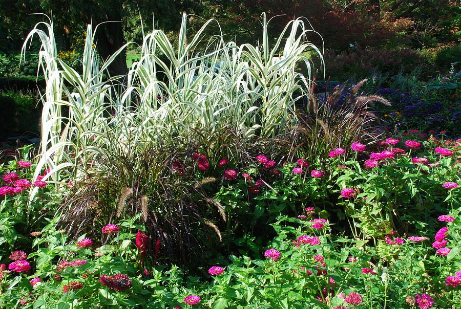 Charming Garden Photograph