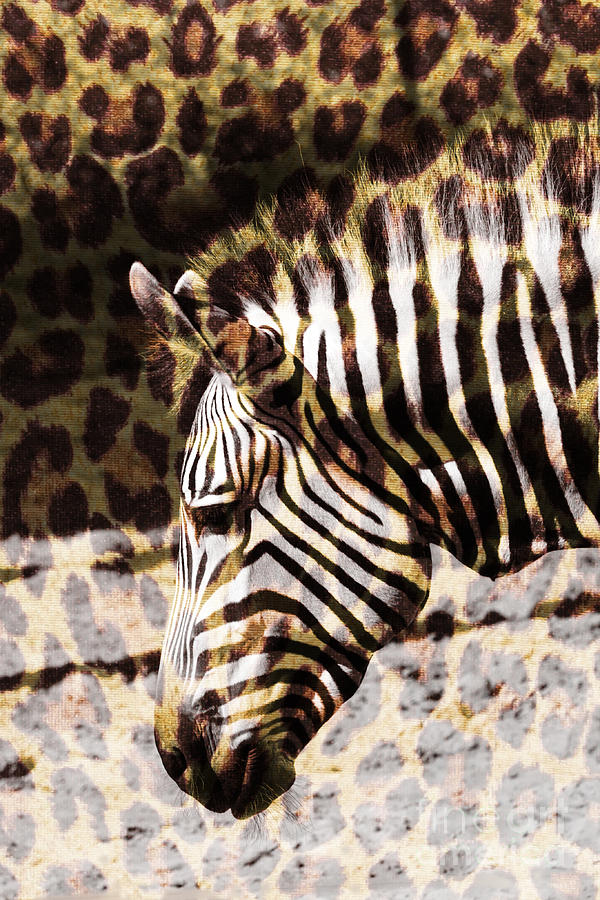 Cheetah Print Zebra by Carol Groenen