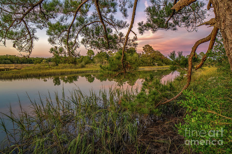 Cherry Grove Afternoon by David Smith