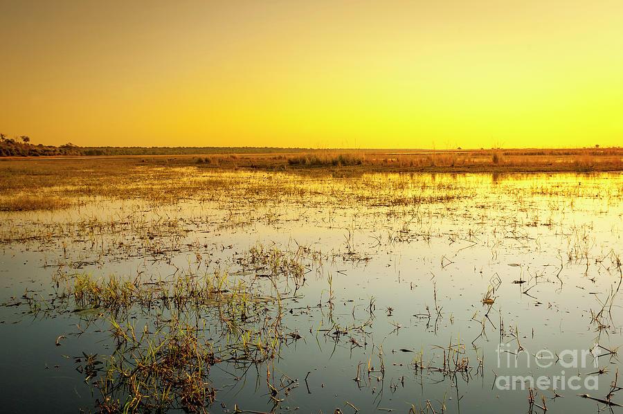 Chobe River Photograph