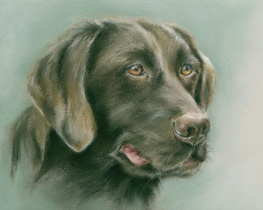 Chocolate Labrador Retriever Dog by MM Anderson