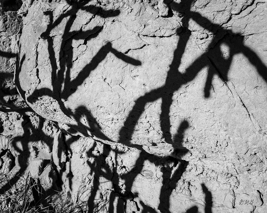 Cholla Shadows BW by David Gordon