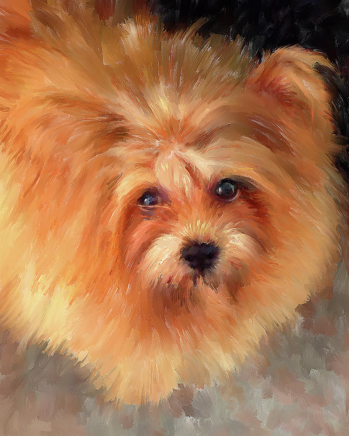 Chow-Chow Portrait by Portraits By NC