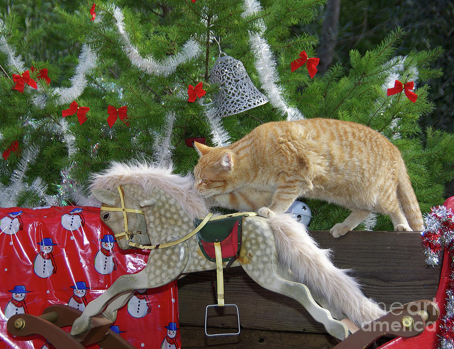 Christmas Cat On Rocking Horse Photograph