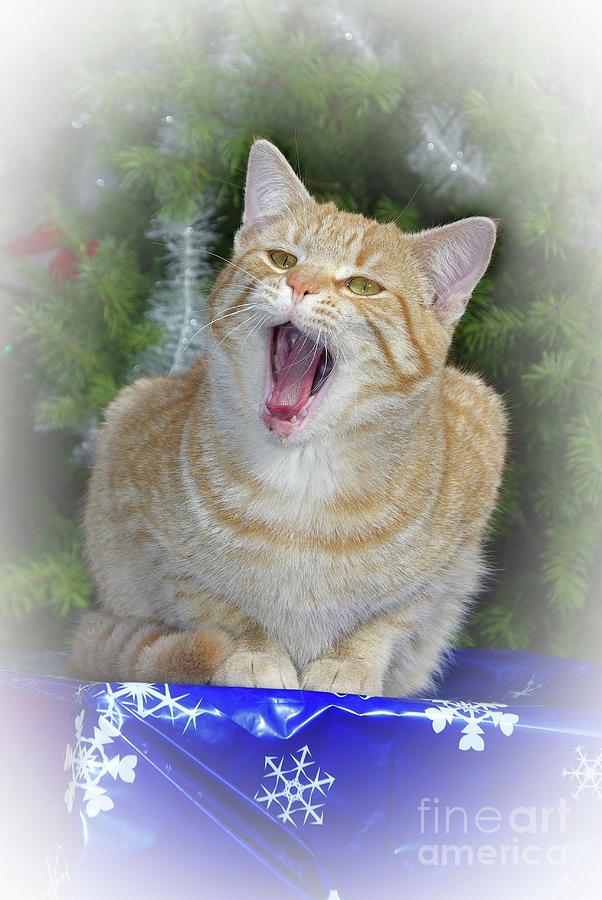 Christmas Cat Singing Photograph
