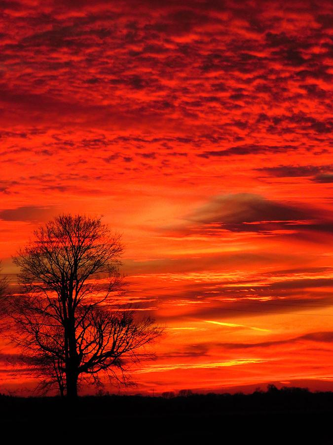 Christmas Day Sunset  by Lori Frisch