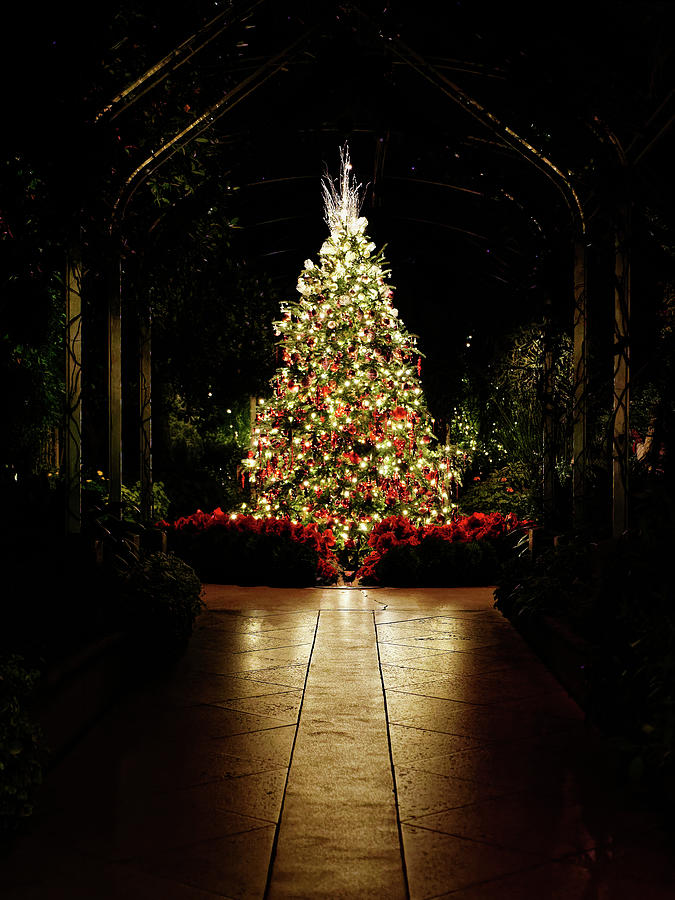 Christmas Eve Photograph