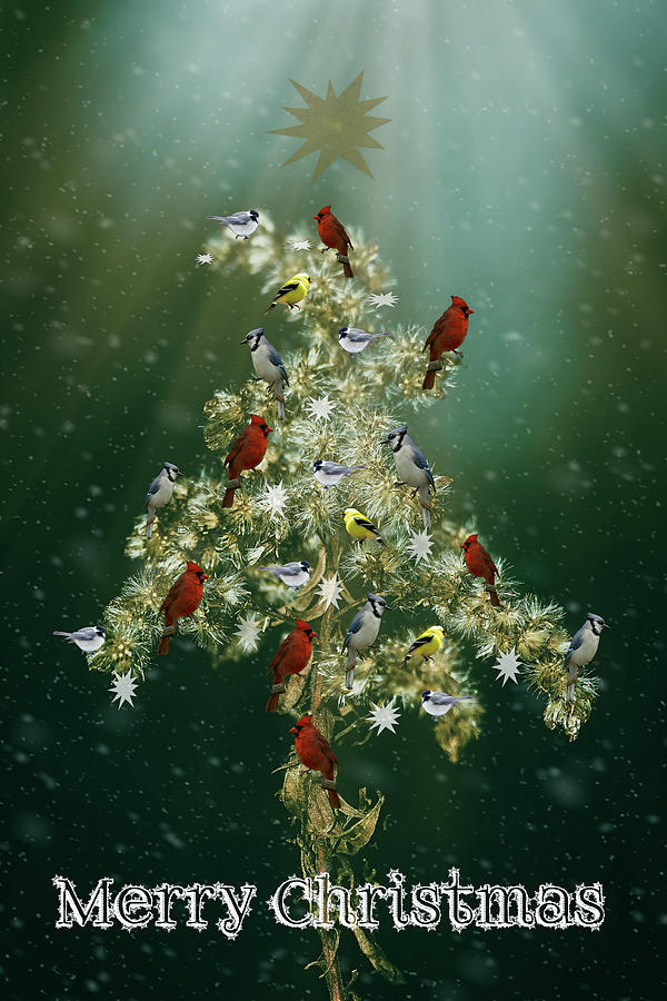 Christmas Goldenrod And Songbirds Greeting Card Photograph