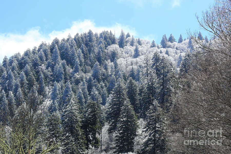 Great Smoky Mountains National Park Photograph - Christmas In April, Great Smoky Mountains National Park by Felix Lai