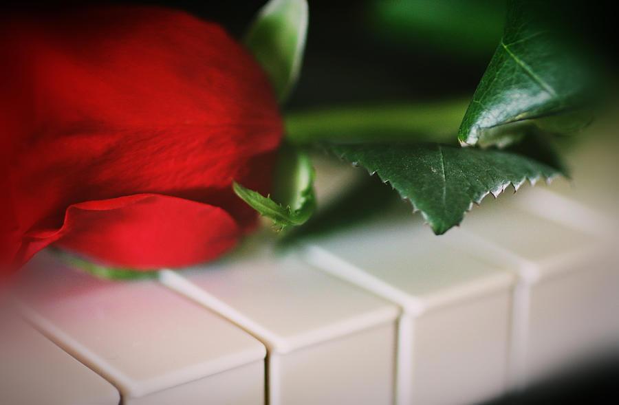 Christmas Love Rose by The Art Of Marilyn Ridoutt-Greene
