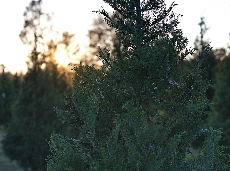 Christmas Tree 3 by Andrea Anderegg