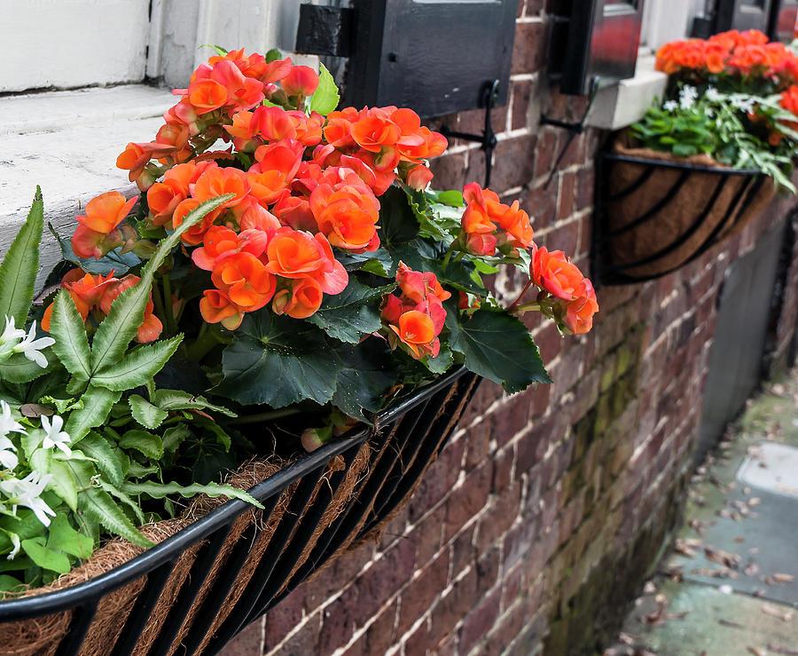 Charleston Photograph - Church Street Flowers by Norman Johnson